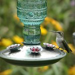 Female hummingbird