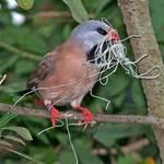 Nesting Mania