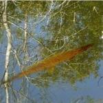 TravlynWomyn's fish