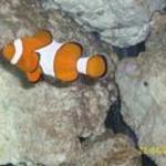 fishey looks like nemo