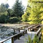 Floating Bridge at VanDusen Gardens