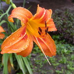 Orange Flower