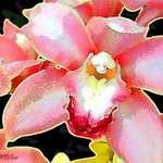 Batik Orchid