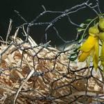 Kowhai Nest