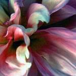 rainbow flower detail