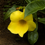 Rainforest Flower, Maui