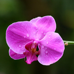 One single orchid