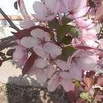 Spring has sprung #2