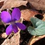 Floating Wild Flower