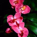 Staged Flower 2
