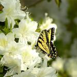 Ben's Butterfly