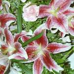 stargazxer lily bouquet
