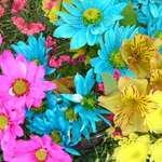 vivid colours