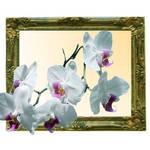 framed Phalaenopsis orchid