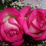 Pink twin beauties
