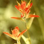 Wildflower 02