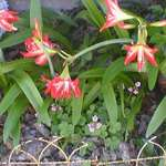 Flowers IN Mom's Garden