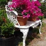Bench and Bouganvillea