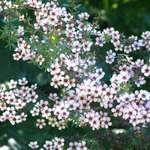 Spring Clusters