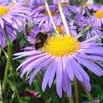Bee's Blue heaven