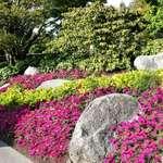 Colourful Floral Border