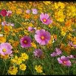 Hwy. Flowers
