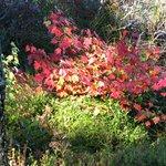 Foliage 09