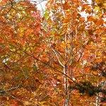 Foliage _09