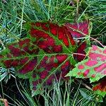 Foliage_09