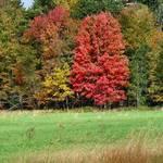 Foliage 2005