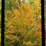 Window Foliage