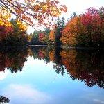 Foliage Reflections