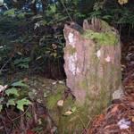 In thr forest