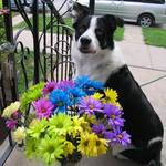 For You! My Dog & Flowers