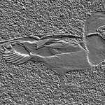Fossilized Duk