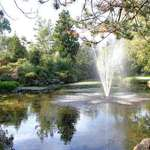 Fountain Reflection