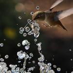 Fountaintounge