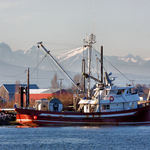 Fraser River fishing boats in March