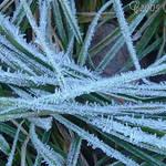 Frost Bitten macro