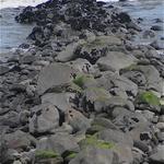 Full Reef