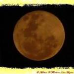 Orange Moon 20-08-2005