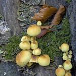 Fungi ..