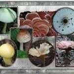Fungi in O'Leno State Park
