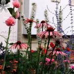 Garden Flowers 2008