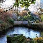 Winter Garden & Frozen Pond