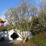 Japanese Gardens - Hamilton