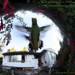 Gazing Ball Hummingbird 2008