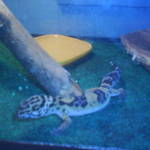 my gecko with out the blur
