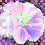 Geranium abstract