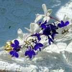 glass slipper & fairy flowers